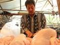 Impor Ayam Brasil Ancam Peternakan Unggas Rakyat