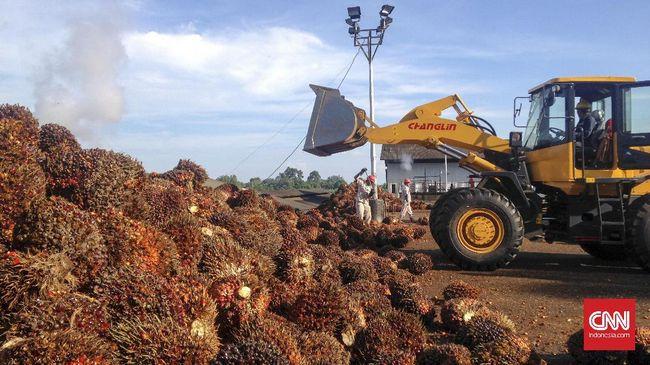 Petani Sawit Desak Pemerintah Pungut Ekspor CPO