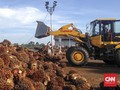 Industri Diminta Beli Tandan Sawit Petani Sesuai Harga Daerah