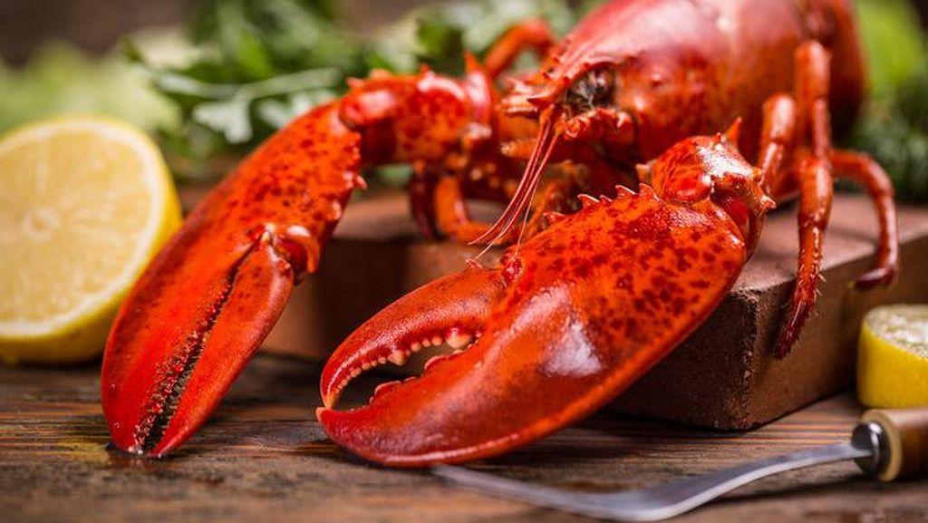 Sebelum Dimasak, Restoran Ini Sengaja Beri Lobsternya Asap Daun Ganja Bakar