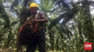Karena Indomie, Indonesia Barter CPO dengan Minyak Nigeria
