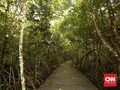 Menjaga Hutan Bakau Halmahera Tengah