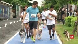 Ratusan Anjing Ikut Aksi Amal di Bangkok
