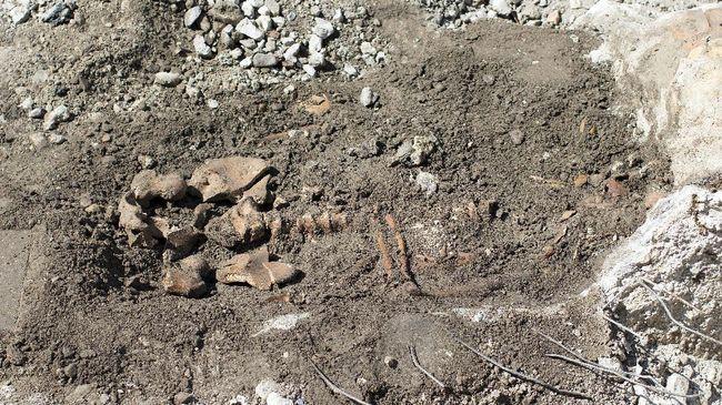 Fosil Manusia Jadi Fondasi Bangunan Ditemukan di Korea