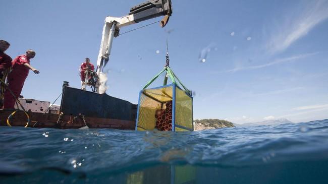 Setelah satu tahun disimpan, wine-wine tersebut diangkat dengan crane untuk dilakukan uji kematangan selanjutnya. (AFP PHOTO / Boris HORVAT)