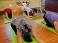 Sembilan Yoga Aneh Untuk Rayakan Hari Yoga Internasional