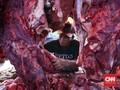 Kementan Klaim Impor Daging Kerbau Demi Stabilkan Harga