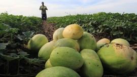Menjajal 4 Aplikasi dan Situs Beli Sayur Buah dari Petani