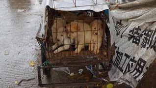 Pengadilan Korsel Larang Konsumsi Daging Anjing