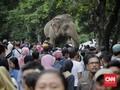 Ramai Pengunjung, Jatah Libur Hewan di Ragunan 'Disunat'