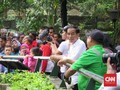 Kenangan Jokowi bersama Gorila 'Kumbo' di Ragunan