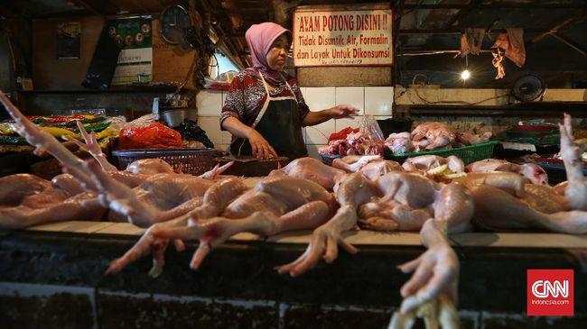 Mendag Akui Gagal Kendalikan Harga Ayam Saat Lebaran