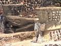 Ilmuwan Ungkap Penyebab Punahnya Suku Aztec Sejak 5 Abad Lalu