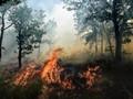 Titik Api Kebakaran Hutan di Kalbar Meluas