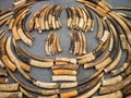 Vietnam Sita 8 Ton Gading Gajah dan Trenggiling Selundupan