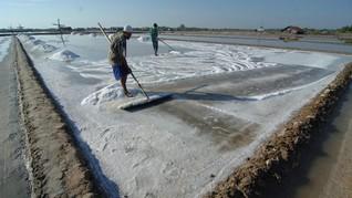 Jokowi Sebut Produksi Garam Lokal Masih Jauh di Bawah Impor