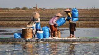 Kemenko Maritim Bantah Harga Garam Jatuh Karena Impor