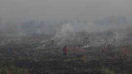 Lima Provinsi Tetapkan Siaga Darurat Penanganan Bencana Asap