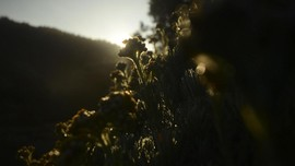 FOTO: Terpincut Edelweis dan 1001 Wajah Papandayan