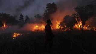 BPBD Catat 20 Hektare Lahan Sawit Terbakar di Agam Sumbar