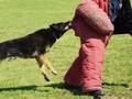 Delapan Alasan Anjing Agresif dan Menggigit Manusia