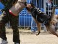 Lima Hal yang Harus Dilakukan Saat Diserang Anjing