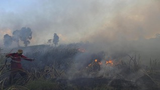 Dana 'Panas' Sawit Maybank Rp34 T Rusak Hutan Indonesia