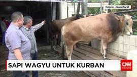 Sapi Lokal hingga Wagyu Dijual untuk Kurban