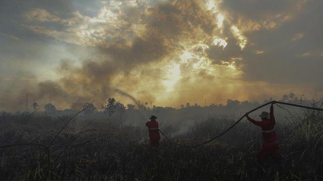 Kemarau, 13 Provinsi Rawan Kebakaran Lahan dan Hutan