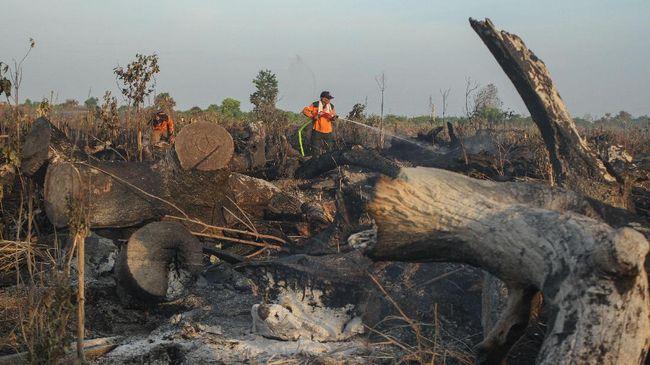 Cegah Kebakaran Hutan, Pemerintah Godok Insentif bagi Desa