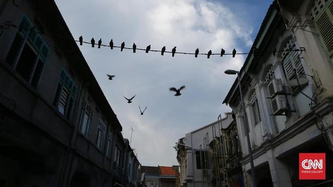 Sekelompok burung merpati yang bertengger di kabel listrik membentuk komposisi garis dan susunan bangunan tua menjadi bingkainya.
