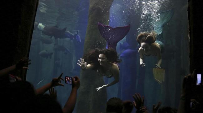 Sejumlah putri duyung menyapa dan berpose di hadapan pengunjung di Sao Paulo Aquarium pada awal Juni 2017. Profesi Putri Duyung satu di antara yang unik dan makin diminati kini di Brazil. (Foto/REUTERS/Pilar Olivares)