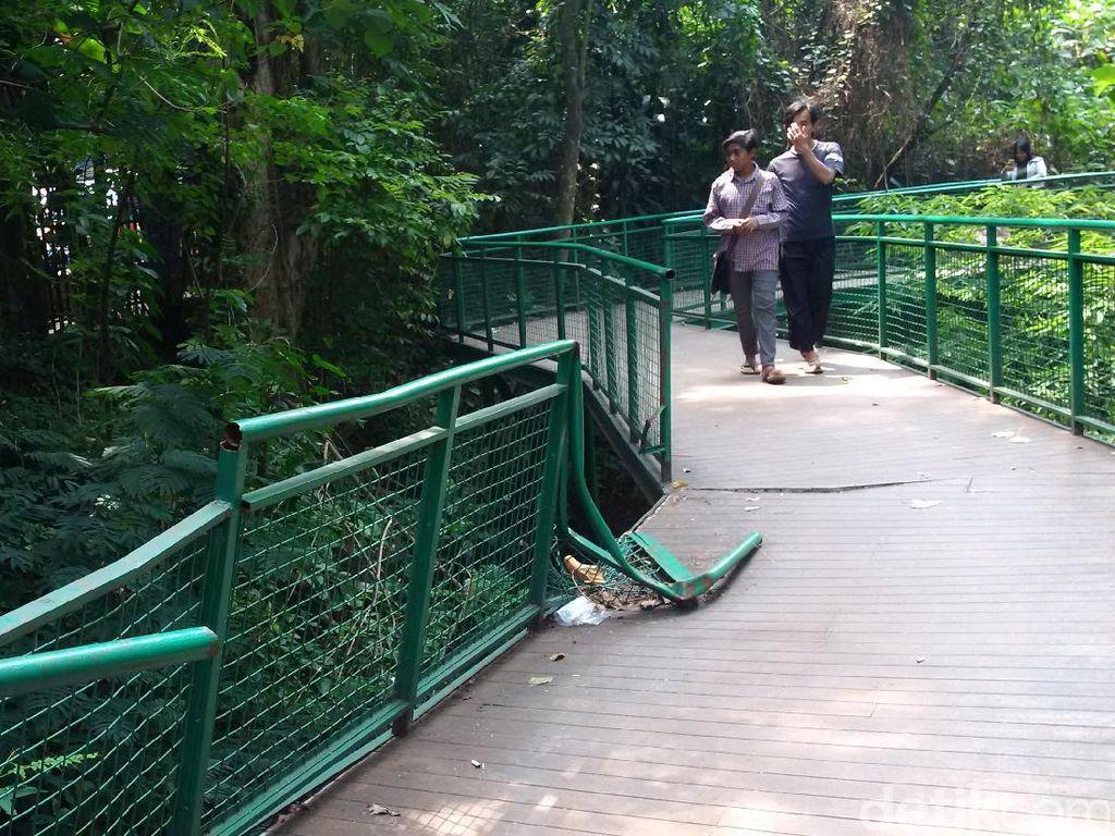 Sayangnya sebagian pagar pembatas forest walk sudah rusak sehingga membahayakan pengunjung/Foto: Mochamad Solehudin