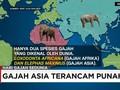 Gajah Asia Terancam Punah