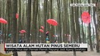 Wisata Hutan Pinus Semeru Jadi Perbincangan Media Sosial