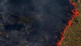 Yang Bisa Dilakukan untuk Selamatkan Hutan Amazon