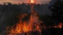 Kebakaran Parah Hutan Amazon Bisa Terlihat dari Luar Angkasa