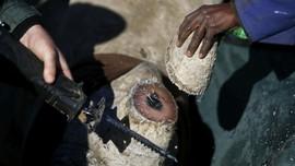 Dikecam, China Tunda Rencana Legalkan Perdagangan Cula Badak