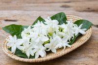 Bunga melati memiliki efek yang menenangkan bagi tubuh Anda. Tanaman ini dikatakan dapat mengurangi tingkat kecemasan pada diri seseorang dan membawa banyak energi positif. Foto: ilustrasi/thinkstock