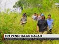 Patroli Tim Penghalau Gajah Liar