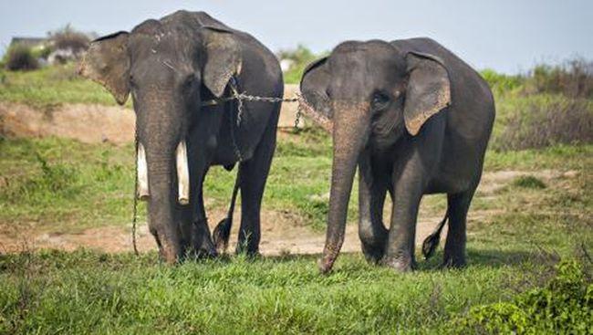 Lampung Timur Punya Atraksi Wisata Kamping Bareng Gajah