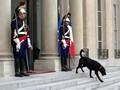 Nemo, Anjing 'Nomor Satu' Perancis Teman Baru Macron
