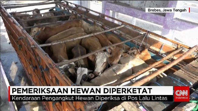 Hewan Ternak yang Melintas di Pantura Diperiksa Intensif