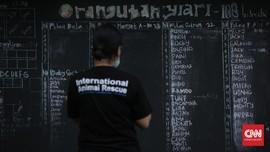 Orangutan Masuk Sekolah Agar 'Move On' dari Trauma