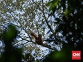Mengasuh Orangutan, Melestarikan Masa Depan