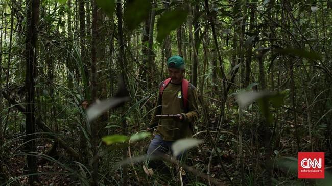 """Pembabatan hutan untuk dijadikan lahan tanam kelapa sawit membuat rumah orangutan ikut tergusur. PT Kayung Agro Lestari (KAL) mencoba """"berlaku adil"""" dengan memberikan lahannya sebagai hutan konservasi orangutan."""