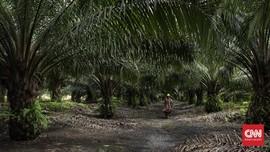 Perjalanan Panjang ke Kandang Asli Orangutan Kalimantan
