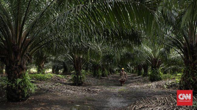 GAPKI Yakin Aturan Biodiesel Bikin Harga Sawit Naik US$50