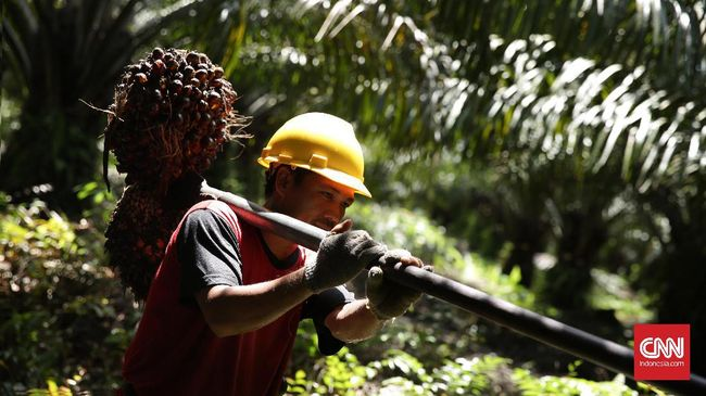 Jokowi Desak Uni Eropa Setop Diskriminasi Sawit Indonesia