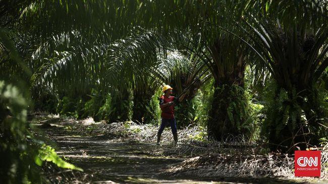 Petani Sawit Kritik Aturan Baru Pungutan Ekspor Minyak Sawit
